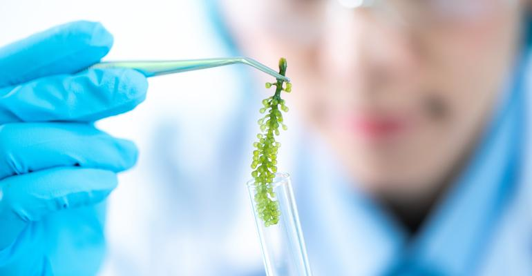 The-mainstream-promise-of-microalgae-01.jpeg