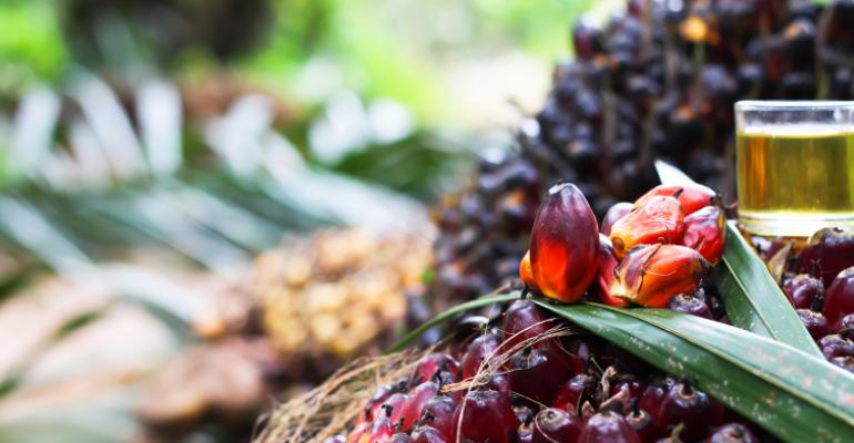 palm-oil-01.jpeg